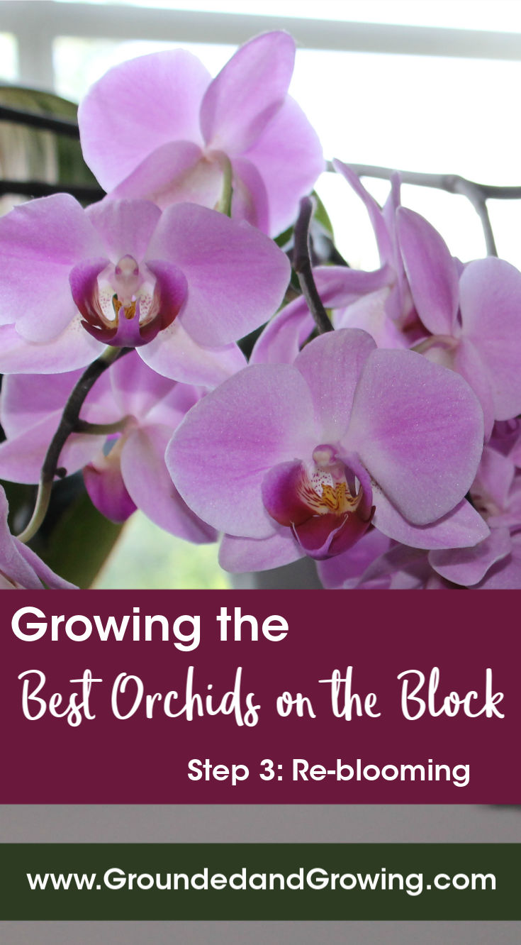 Tips and Tricks for the Best Orchids on the Block-- Step 3